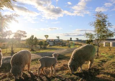 Mudgee farmstay pics-4147