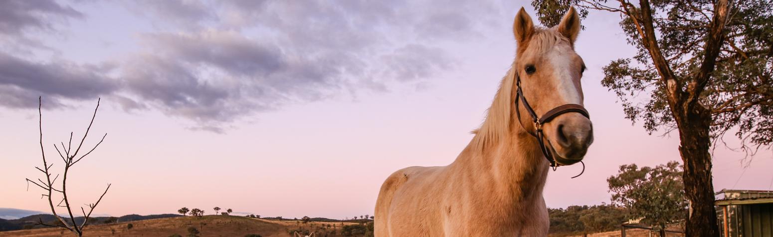 White Horse Banner Bamack Farmstay